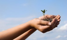 Monsanto an Bayer Crop Science interessiert