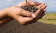 Düngemittel: Shell und Uhde Fertilizer Technologies geben Zusammenarbeit bekannt