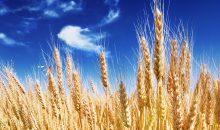 Mithilfe der Banken will Bayer sein Übernahmeangebot für Monsanto erhöhen  (Bild: itestro – Fotolia)
