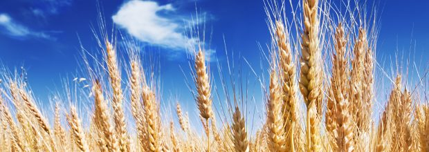 Monsanto zeigt sich vom Übernahme-Angebot von Bayer unbeeindruckt – und fordert mehr Geld  (Bild: itestro – Fotolia)