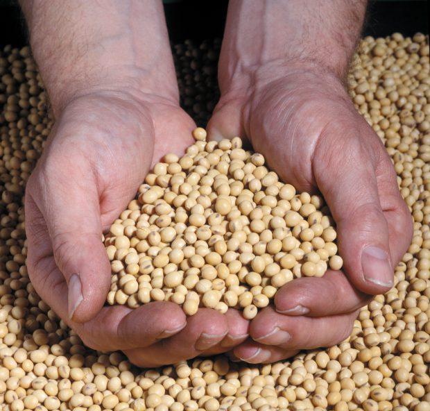 Bayer und BASF angeblich an Monsanto-Übernahme interessiert