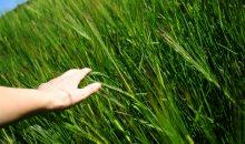 Bayer erhöht Angebot für Monsanto-Übernahme – ein bisschen