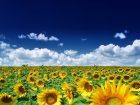 Kauft Monsanto die BASF-Agrarsparte?