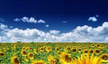 Monsanto-CEO Hugh Grant will sein Unternehmen möglichst teuer verkaufen. (Bild: e-parfait – Fotolia)