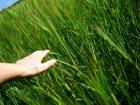 15.07.16: Die Gegenoffensive zeigt Wirkung: Nach den Gerüchten, dass Monsanto eventuell die Agrarsparte der BASF übernehmen will, legt Bayer nach: Der Konzern erhöht sein Angebot von 122 auf 125 US-Dollar pro Monsanto-Aktie. Und signalisiert Bereitschaft zu weiteren Zugeständnissen. (Bild: Doreen_Salcher – Fotolia)