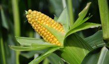 13.12.2016: Auch die Aktionäre von Monsanto stimmen dem Saatgut-Milliardendeal zu. (Bild: Marianne Mayer – fotolia)