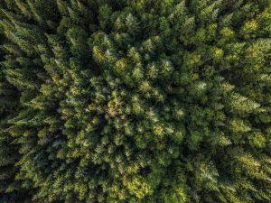 In der Bioraffinerie sollen aus Holz chemische Grundstoffen entstehen. (Bild: UPM)