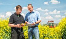 Landwirte mit Tablet auf einem Rapsfeld