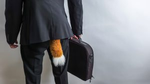 Sneaky businessman in black suit with a briefcase and a fox tail.  Concept for economic / white collar crime, fraud and black market. White background with copy space for text.